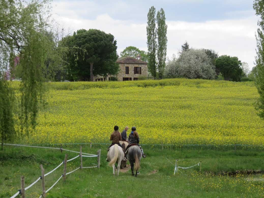 paardrijders langs koolzaadveld