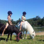 zwemmen met pony's