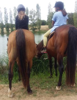 paarden en pony's aan het Lac de Veronne